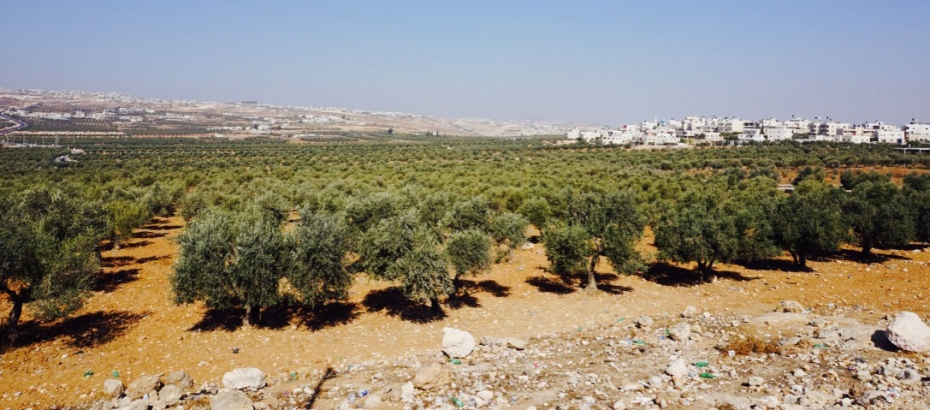 Peace Building and Eco-Justice in Palestine