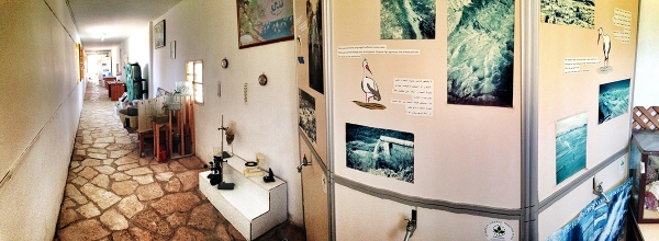 Environmental Exhibition